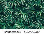 tropical leaf texture... | Shutterstock . vector #626900600
