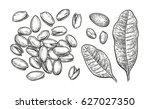 pistachio nuts set. ink sketch. ... | Shutterstock .eps vector #627027350