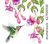 Watercolor Illustration  Exoti...