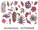 set of hand drawn tropical... | Shutterstock .eps vector #627030668