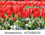 tulip   Shutterstock . vector #627058253