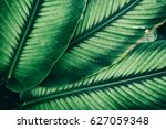 details of large foliage ... | Shutterstock . vector #627059348