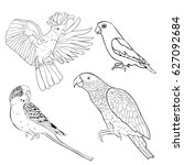 coloring jaco  lovebird  wavy... | Shutterstock .eps vector #627092684