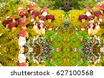 Mushrooms In Forest Landscape....