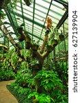 garden plants in jakarta ... | Shutterstock . vector #627139904