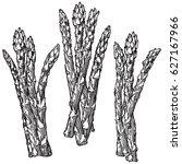 sketch hand drawn asparagus.... | Shutterstock .eps vector #627167966