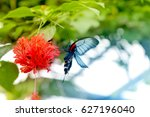 beautiful butterfly is eating... | Shutterstock . vector #627196040