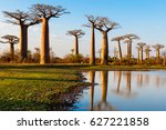 baobab trees near morondava... | Shutterstock . vector #627221858