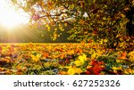 Panorama Of A Bright Autumn...