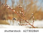 the bud of the willow branch  | Shutterstock . vector #627302864