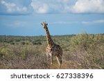 giraffe  namibia | Shutterstock . vector #627338396