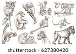 animals   monkeys and apes  ...   Shutterstock . vector #627380420