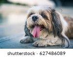 Shih Tzu Dog. 2