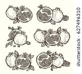 hand drawn vector pomegranate... | Shutterstock .eps vector #627496310
