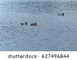two wild ducks swimming on a... | Shutterstock . vector #627496844