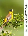 cute singing bird. green nature ... | Shutterstock . vector #627556646