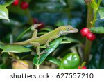 Young Green Anole Lizard ...