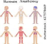 human anatomy for kids.... | Shutterstock . vector #627578669