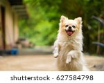 happy dog | Shutterstock . vector #627584798