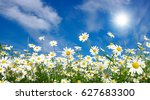 field of daisies  blue sky and...   Shutterstock . vector #627683300