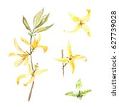 botanical watercolor...   Shutterstock . vector #627739028