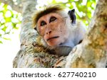 Monkey On Tree. Monkey Portrait