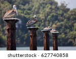 The Pelicans Rest  Sitting On...