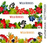Wild Berries And Wildberry...