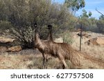 Alice Springs Australia  Emus...