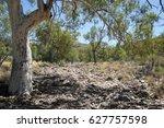 Alice Springs Australia  Gum...