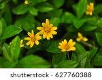 Beautiful Yellow Daisy Flowers