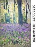 bright bluebells growing on an... | Shutterstock . vector #627773180