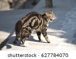 Small photo of an angry cat