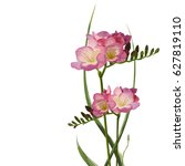 flower freesia with buttons and ... | Shutterstock .eps vector #627819110