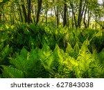 fern field | Shutterstock . vector #627843038