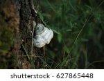 Fungus Parasite