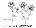 carnation flowers drawing and... | Shutterstock .eps vector #627872648