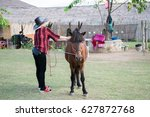 horse riding for rent  pai... | Shutterstock . vector #627872768