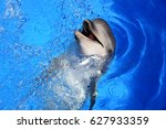 dolphin in the water | Shutterstock . vector #627933359