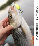 Chub caught on a green hardbait in fisherman's hand - stock photo