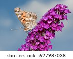 Small photo of Beautiful American Painted Lady butterfly feeding on a purple Buddleia flower cluster with blue sky background