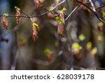 tree buds 2   Shutterstock . vector #628039178