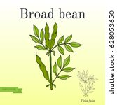 broad beans or fava beans....   Shutterstock .eps vector #628053650