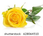Beautiful Yellow Rose Isolated...