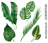 realistic tropical botanical... | Shutterstock .eps vector #628089038
