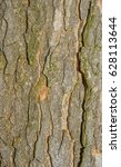 Small photo of Sycamore tree, bark. Acer pseudoplatanus L. Wooden background - texture pattern, for designers