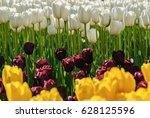 red tulips. beautiful bouquet... | Shutterstock . vector #628125596