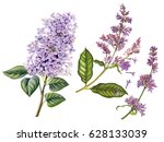 watercolor hand painted lilac.... | Shutterstock . vector #628133039