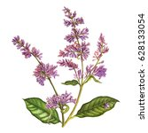 watercolor hand painted lilac.... | Shutterstock . vector #628133054