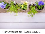 Young Seedlings Of Flowers Wit...